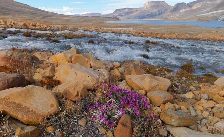 Die Insel Ellesmere liegt im äussersten Norden des kanadischen Arktis-Archipels. Die Insel ist